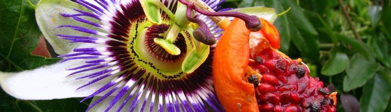 Ontplooi en draag vrucht